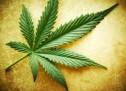 Marijuana Dispensaries
