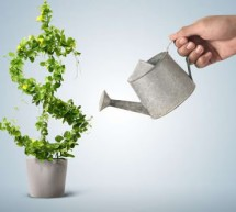 Core Strategies for Organic Growth in Accounting and Financial Services Firms